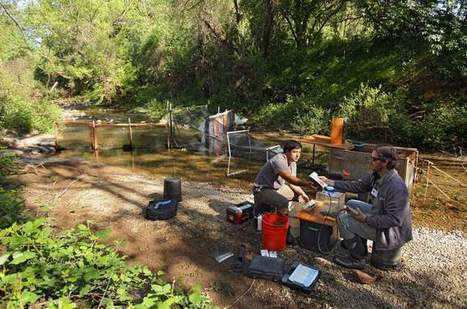 Drying streams pose threat to rare salmon - Santa Rosa Press Democrat | Fish Habitat | Scoop.it