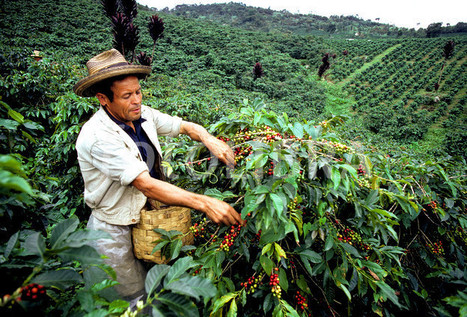 A conversation with Ric Rhinehart: The future of Mesoamerica | Coffee News | Scoop.it