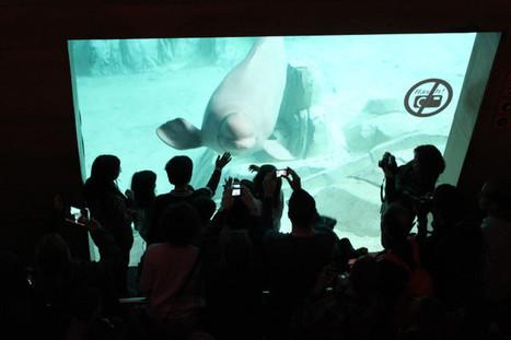 ¿Cómo ejercer un turismo responsable con los animales?   Turismos alternativos en América Latina   Scoop.it