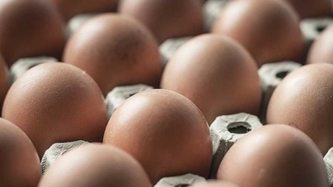 Schoolgirl's petition for Tesco to drop cage eggs gathers pace   OrganicNews   Scoop.it