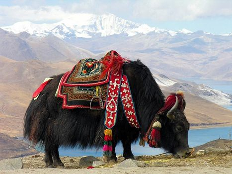 Mystical Land of Fantasy : Tibet | Into Thin Air | Scoop.it