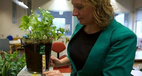 Pays-Bas : Plant-e, ou quand les plantes d'eau produisent du courant - La Dépêche | Elevage Laitier ~ PYB | Scoop.it
