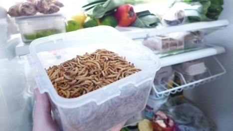 """Sustainable, efficient, and """"slightly nutty"""" — what it's like to eat insect burgers 