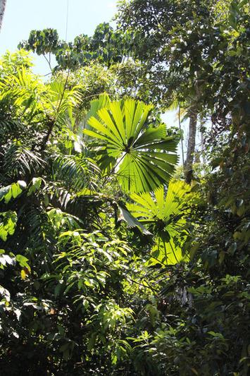 La forêt humide, origine des Bagu, les sculptures aborigènes exposées dans le cadre de Taba Naba | Art Aborigène | Océanie | Scoop.it