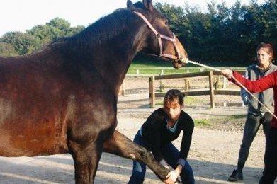 Ostéopathie pour les chevaux : l'Ordre des vétos porte plainte ... | éthologie équine | Scoop.it