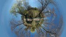 Une nouvelle espèce de raie pastenague révélée par son ADN   Rays' world - Le monde des raies   Scoop.it