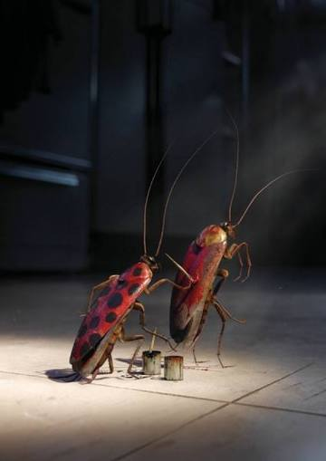 PHILIP ROSTRON - No Pest Can Hide Cockroach - Picture Of The Week - ONE EYELAND | What Surrounds You | Scoop.it