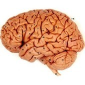 How does the human brain decide which memories to store? | Allicansee | Scoop.it