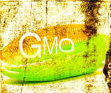 How Dangerous Is Genetically Modified Food? ~ UnHealthyEarth   Viruses and plants   Scoop.it