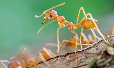 The useful versatility of the humble ant | All About Ants | Scoop.it