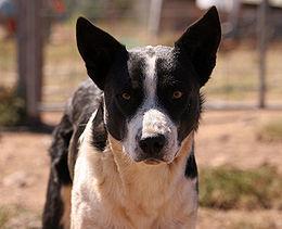 Guardando il cane negli occhi | Med News | Scoop.it