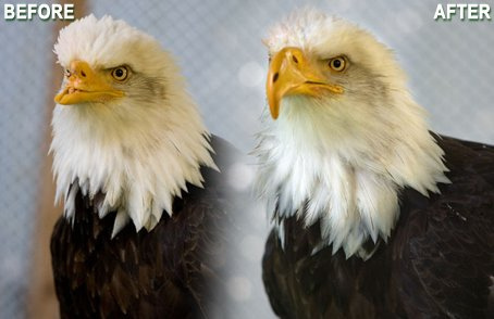 Injured bald eagle gets new 3-D printed beak   Mind Candy  { interdimensionally } Cubed... It's SO yesterday to be a Square   Scoop.it