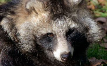 """""""Faux"""" Fur is Often Real Fur from Real Animals. Don't Buy It. 