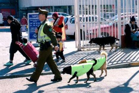Cani abbandonati diventano eroi della Polizia | My Pet's Hero | Scoop.it