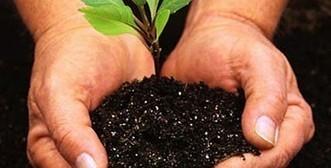 Useful Garden Ideas » Useful Advice For Organic Gardening | Organic News & Devon's Worldviews | Scoop.it
