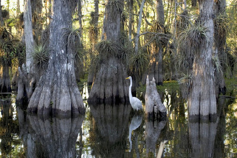 Meeting to consider Everglades restoration plan | The Everglades Puzzle | Scoop.it