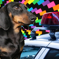 Dog fed LSD by nude couple survives car crash | Animal Cruelty | Scoop.it