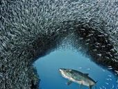 Stunning underwater photos revealed as 'Our World' contest winners | DiverSync | Scoop.it