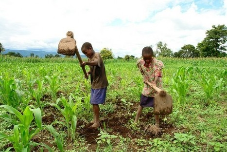 Climate-Proofing Agriculture Must Take Centre Stage in African Policy   Inter Press Service   CGIAR Climate in the News   Scoop.it