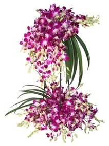 Send Flowers to Mumbai,Online Flowers Delivery in Mumbai,Online Florist in Mumbai | Mumbai Flowers World | Scoop.it