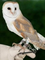 Wedding owl falls asleep on the job | Weddings | Scoop.it
