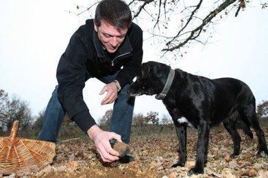 Dordogne : du retard pour la saison de la truffe | Agriculture en Dordogne | Scoop.it