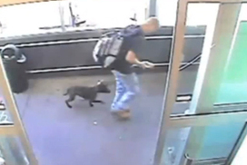 CCTV: Puppy thief caught in the act (00:33) - The Age | Surveillance Studies | Scoop.it