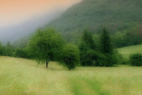 Giurisprudenza in materia di paesaggio - Interventi agro-forestali in ambiti gravati da vincolo paesaggistico   Urbanistica e Paesaggio   Scoop.it