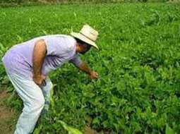 Cuban Agricultural Technicians for Sustainable ... - Prensa Latina | ayubia national park | Scoop.it