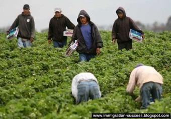 H-2A Visa Information | Atlas: DIY Immigration Activism | Scoop.it
