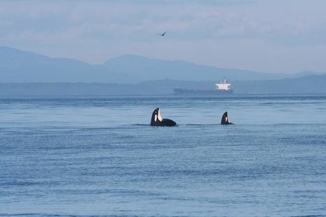 Ship noise extends to frequencies used by endangered killer whales (Canada, USA) | GarryRogers Biosphere News | Scoop.it