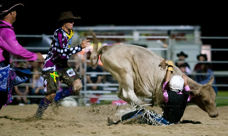 Cr Attwood calls for rodeo ban | Nature Animals humankind | Scoop.it
