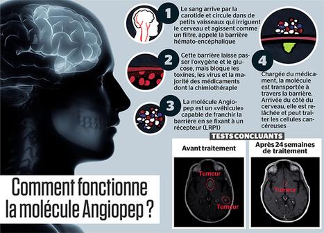 Des chercheurs québécois sont en voie de réussir l'impossible: mettre au point une molécule capable d'atteindre et traiter les tumeurs cérébrales | Le pouvoir du transhumanisme | Scoop.it