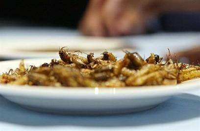 Lola enquête sur les insectes dans nos assiettes | Entomophagy: Edible Insects and the Future of Food | Scoop.it
