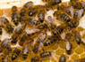 The UK Government Must Agree to a Bee Action Plan - Huffington Post UK (blog)   real utopias   Scoop.it