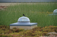 Raven Industries Greens Downtown Sioux Falls With Green Roof - Living Architecture Monitor magazine | GreenRoofs | Scoop.it