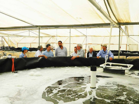 The Aquaculturists: 15/01/2016: Putting it all together | Global Aquaculture News & Events | Scoop.it