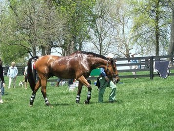 Rest is Recommended When a Horse Ties Up   Equine Health Care   Scoop.it