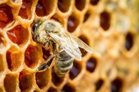 1,4 milliard d'emplois menacés par la disparition des pollinisateurs | apiculture 2.0 | Scoop.it