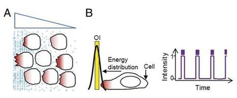 Moving cells with light holds medical promise | KurzweilAI | Longevity science | Scoop.it