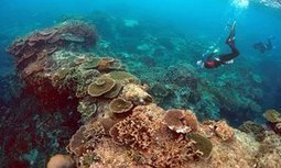 Former Great Barrier Reef marine park head calls for ban on new coalmines | Eco issues | Scoop.it