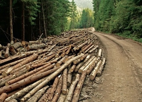 Forestry: Slow growth market | Timberland Investment | Scoop.it