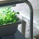 How to Farm in Your Big City Apartment - Earth911.com | Sustainable Futures | Scoop.it