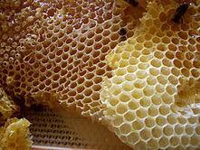 Bal Arısı | Red Honey Macun | saglik | Scoop.it