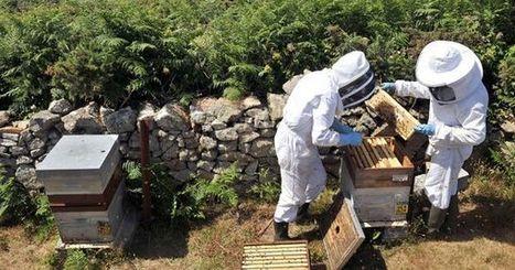 Les apiculteurs de Languedoc-Roussillon appellent l'Etat à l'aide | Let me think about it | Scoop.it