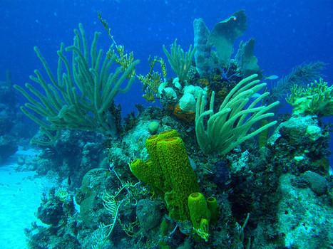A diving adventure in Cuba   Caribbean Charm   Scoop.it