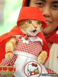 Why do people dress up their pets? | Amusing, Shocking & Thought-Provoking News | Scoop.it