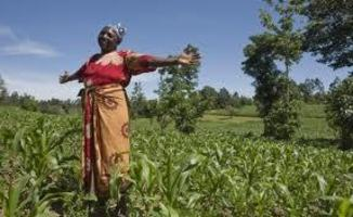 TURNING AFRICA INTO A GMO BONANZA FOR GIANT COR...