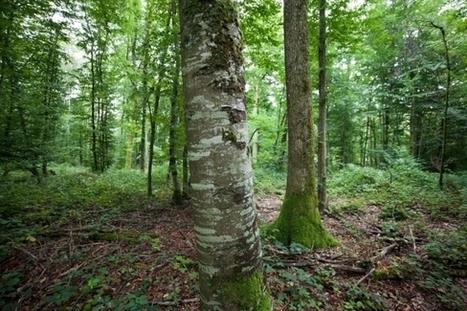 La préservation des sols forestiers au cœur de PEFC   Interprofession Forêt Bois des Pyrénées-Atlantiques   Scoop.it