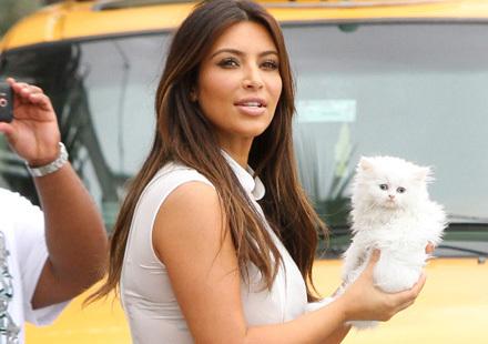 Chats et mini chiens... Les nouveaux it-bags des stars ? | Edenzo - L'information et l'actualité des chiens et chats | Edenzo.com | Scoop.it